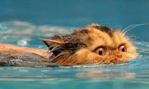 chat noyade piscine danger