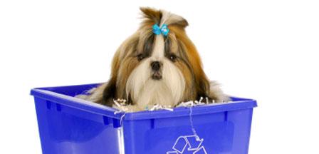 chien écologique