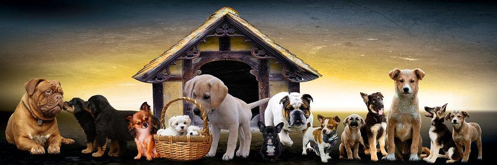 Les chiens de race