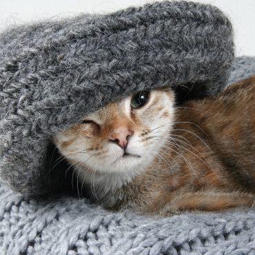 Corbeille et panier pour chats