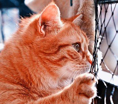 cat-4292363__340