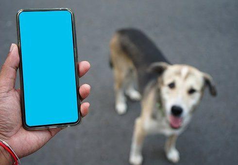 Comment sauver son chien?