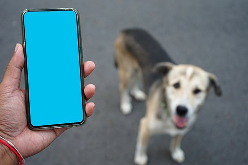 Comment sauver son chien ?