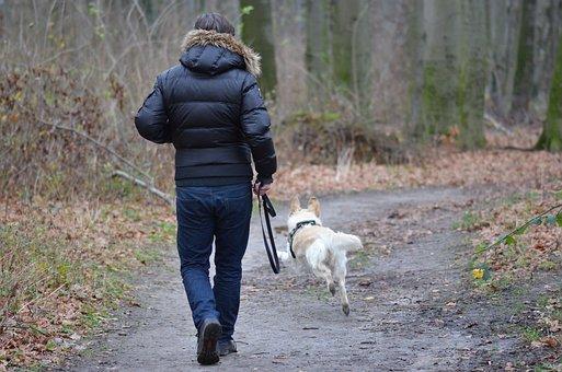 promenade chien seignosse