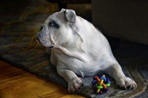 Jeux pour chiens