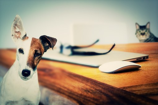 éducation canine Seignosse