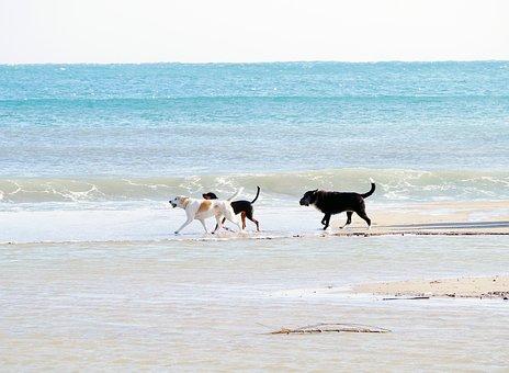 promenades chien Landes