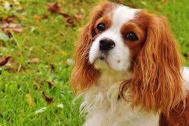 Bien comprendre votre chien