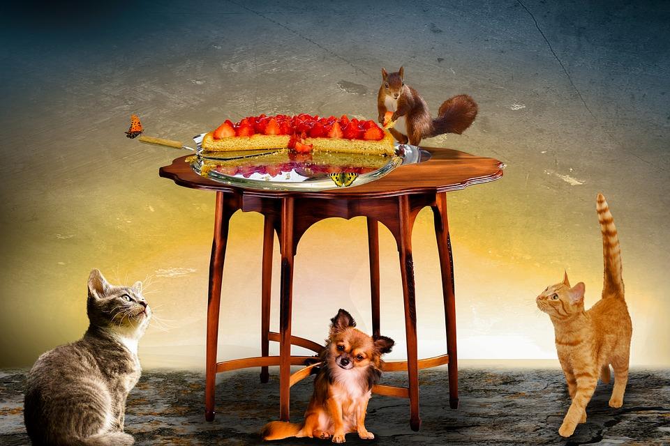Les aliments dangereux et toxiques pour les animaux
