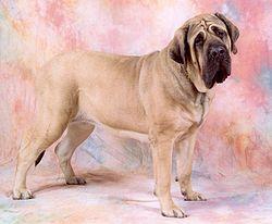Groupes par Races de chiens