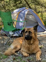 camping animaux admis Landes