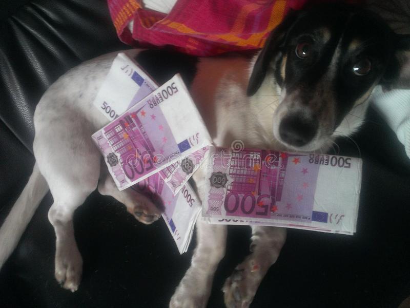 Un chien combien ça coûte ?