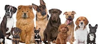 Quel chien choisir ?