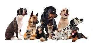 Groupes de chiens