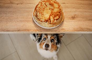 Pancake chien